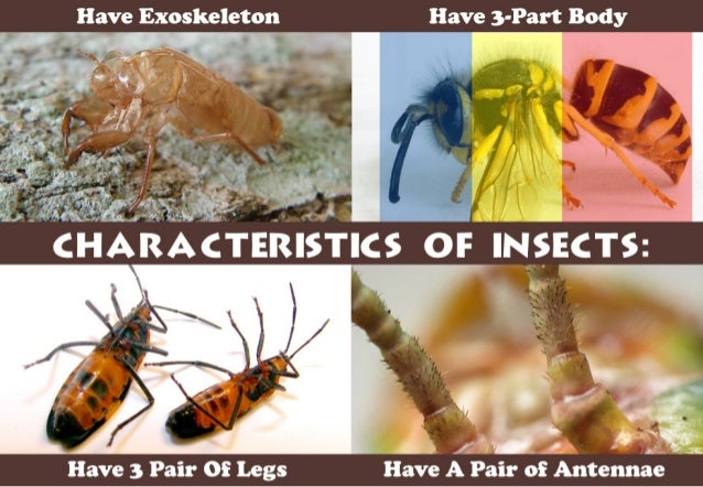 Have Exoskeleton Have 3-Part Body        »-O  'V  '.  'I :   _.  A I ,  K .  Have 3 Pair Of Legs Have A Pair of Antennae