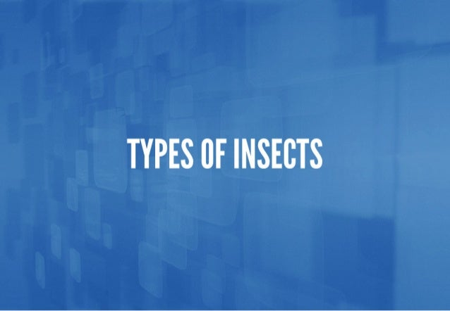 TYPES CF INSECTS