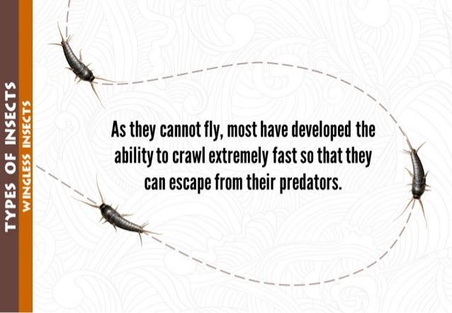 k. .    As they cannot fly,  most have developed the    4 ability to crawl extremely fast so that they ;  can escape from ...