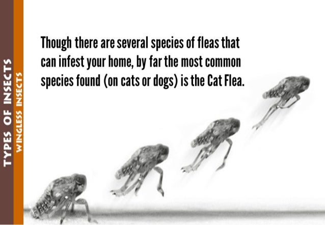 """'I:  l_
