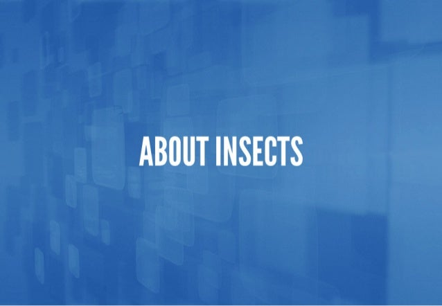 ABIIUT INSECTS