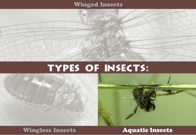 Winged Insects     Wingless Insects I Aquatic Insects