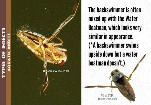 "I3 I / = 35 . ,  '1' — Z  ""  IL v ""'~   ' ~~'  — 4:   O I-  V5; I! '  2: v <- * < B»'OeCI($WIMMER I-  . l  The backswimmer..."