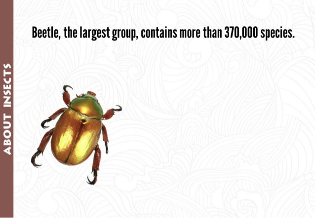 Beetle,  the largest group,  contains more than 310,000 species.   vs I- V In vs Z I- 3 O Q 4