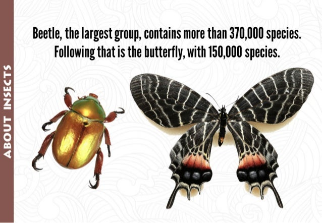 Beetles,  the largest group,  contains more than 370,000 species.  Following that is the butterfly,  with 150,000 species....