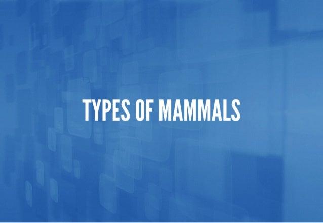 TYPES 0F MAMMALS