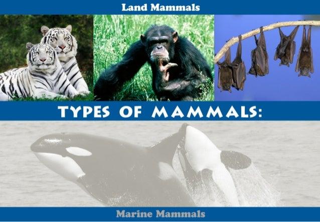 ". -. «-, j;""': .vu.       E       Land Mammal  'T''': - . ;:; ..: W ""    * fl"",  .. '.~  - 1'-Q' l .  .- 1-~"" . i.-: . :3. ..."