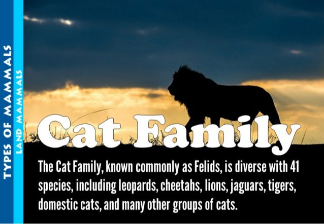 s - .  Z',  . E k 'as.   The Bat Family,  known commonly as Felids,  is diverse wi 41 species,  including leopards,  cheet...