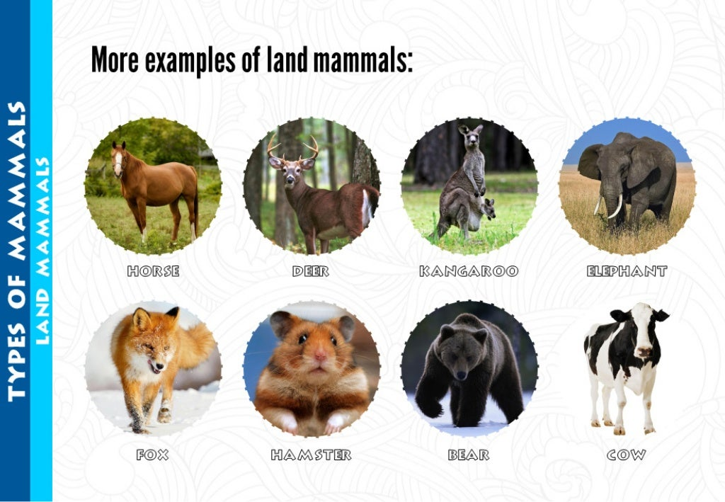 More examples of land mammals: