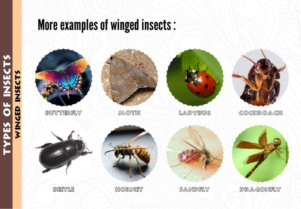 Examples Of Insectivores WINCED INSECTS More ex...