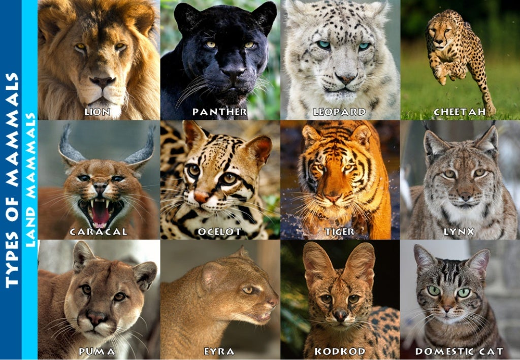 TYPES OF MAMMAES LAND MAMMALS