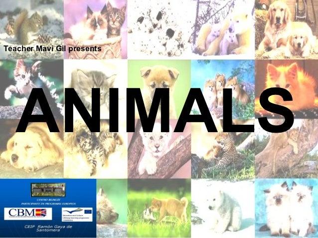 Teacher Mavi Gil presents   ANIMALS