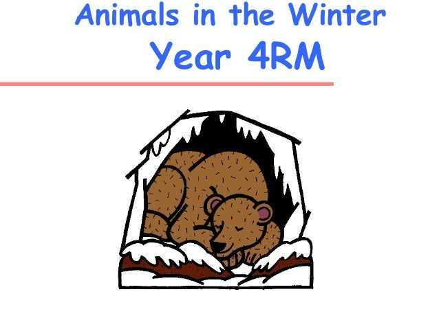 Animals in the Winter Year 4RM