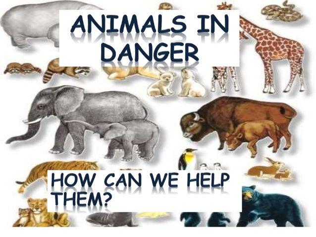 Top 10 animals in danger of extinction