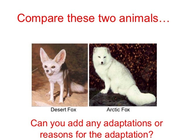adaptive features of animals in polar region Extreme environments - how animals have adapted to the polar environment with sen and high ability information worksheet i have also included a polar code work starter.