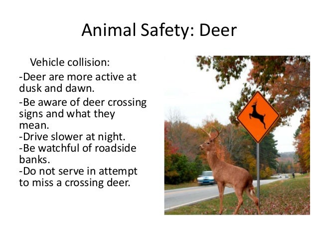 Animal safety signs