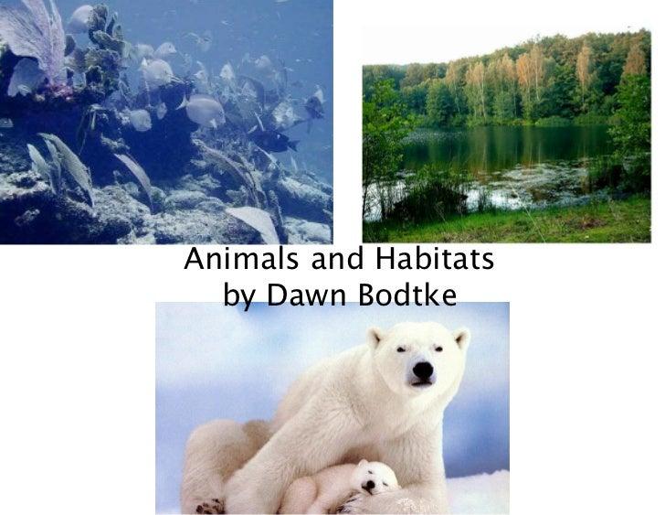 Animals and Habitats  by Dawn Bodtke
