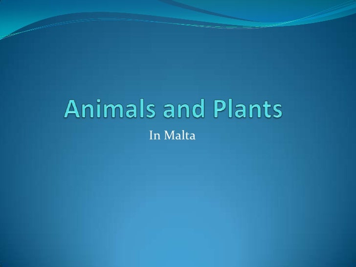 Animals and Plants <br />In Malta<br />