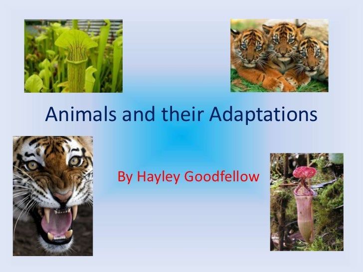Animals and their Adaptations       By Hayley Goodfellow