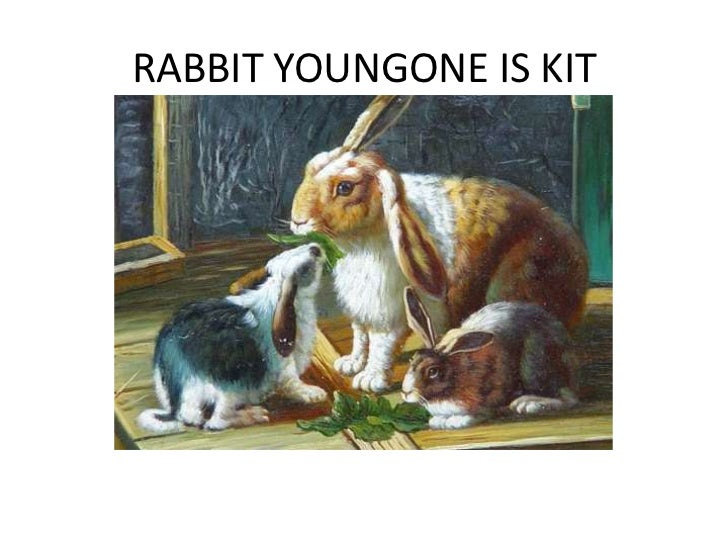 RABBIT YOUNGONE IS KIT