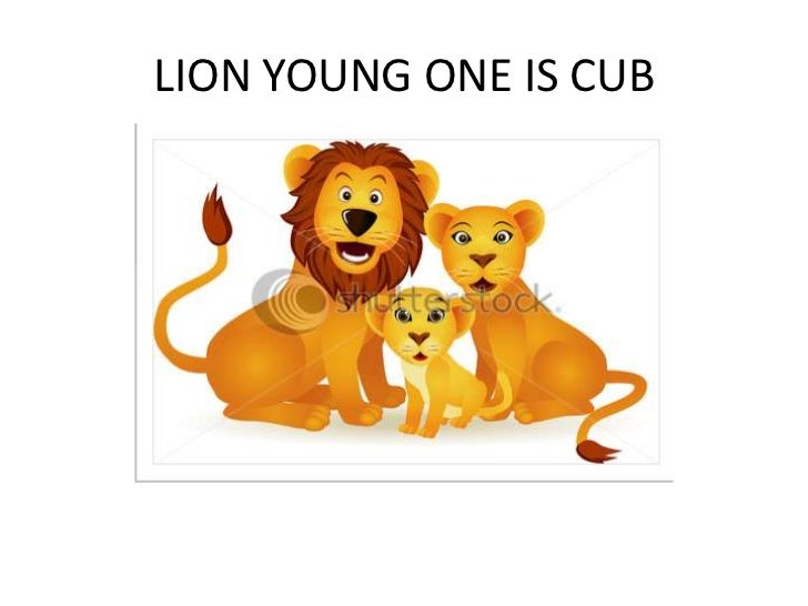 LION YOUNG ONE IS CUB