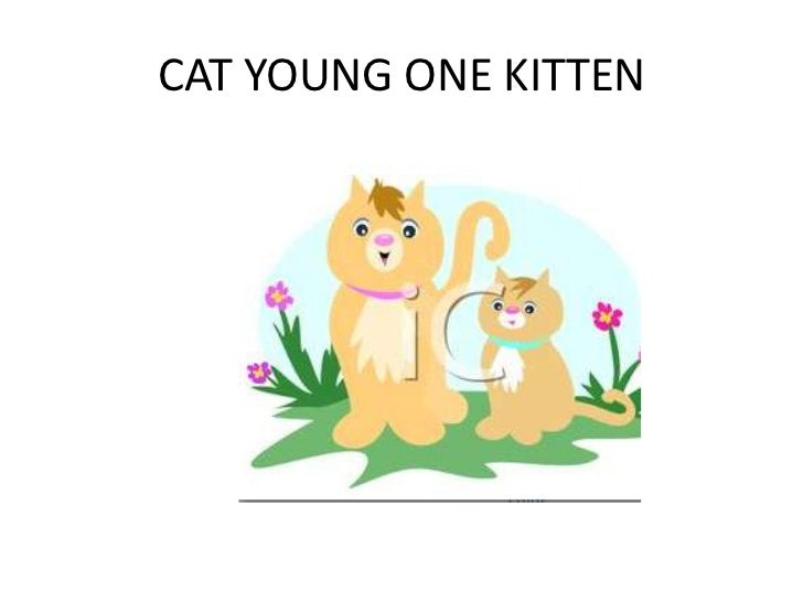 CAT YOUNG ONE KITTEN
