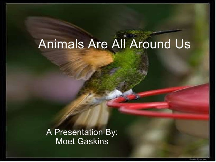 Animals Are All Around Us A Presentation By: Moet Gaskins
