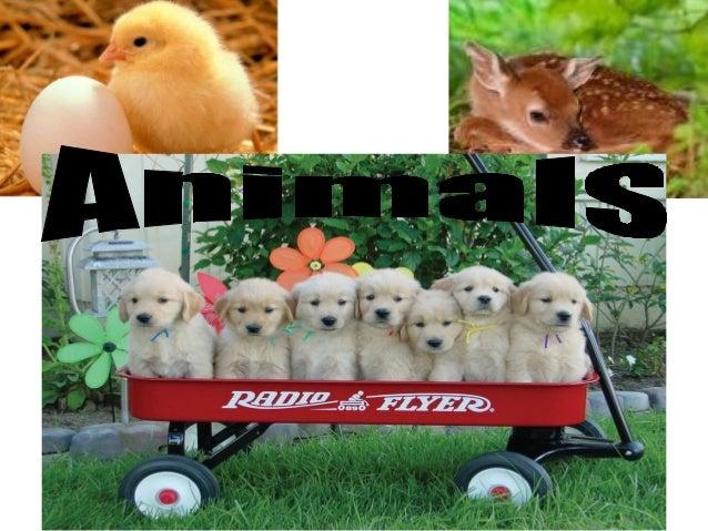 Animals grow