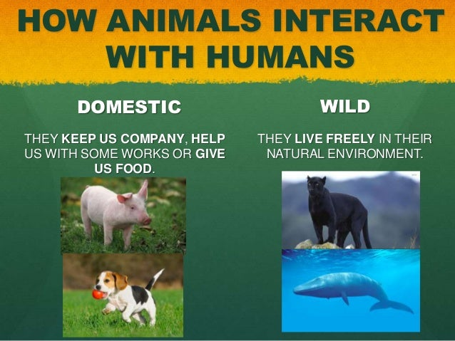 Are Humans Natural Born Carnivores