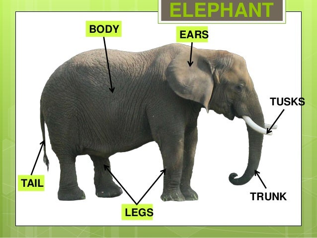 Animals Body Parts