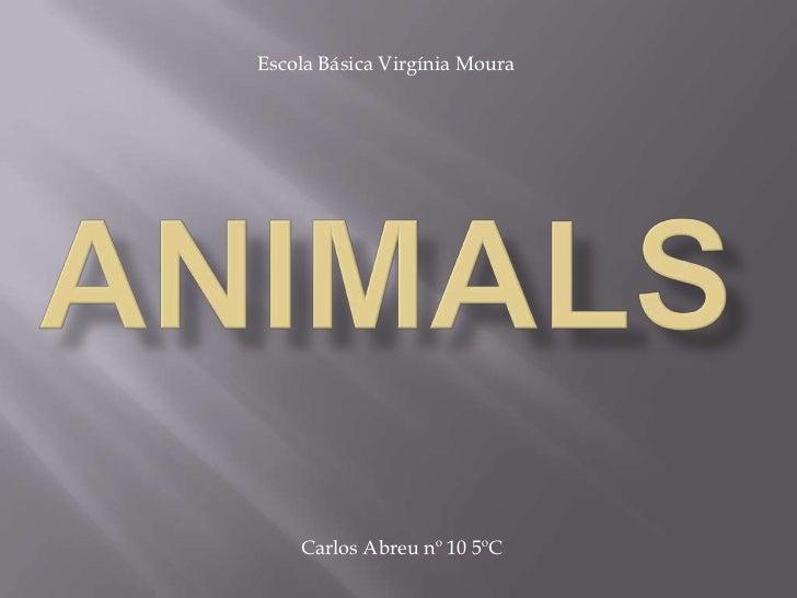 Escola Básica Virgínia Moura<br />Animals<br />Carlos Abreu nº 10 5ºC<br />