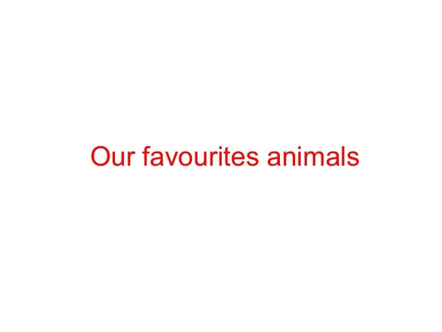 Our favourites animals