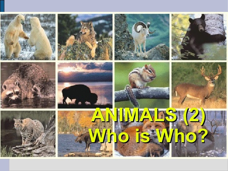 ANIMALS (2) Who is Who?