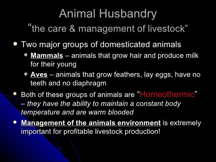 "Animal Husbandry "" the care & management of livestock"" <ul><li>Two major groups of domesticated animals </li></ul><ul><ul>..."