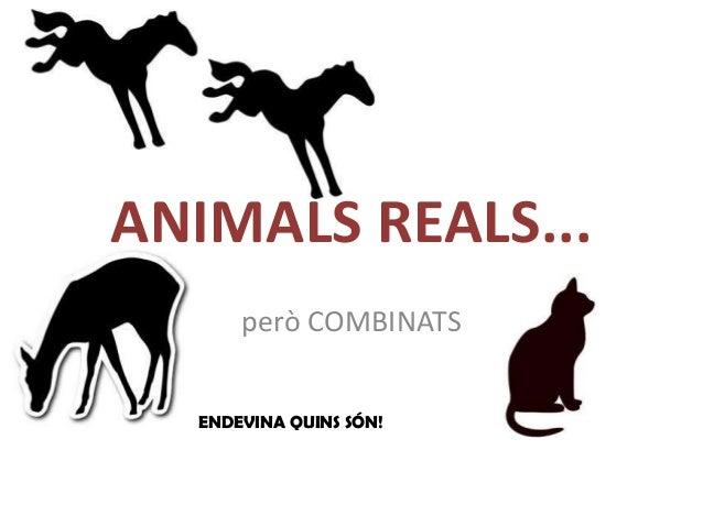 ANIMALS REALS...      però COMBINATS  ENDEVINA QUINS SÓN!