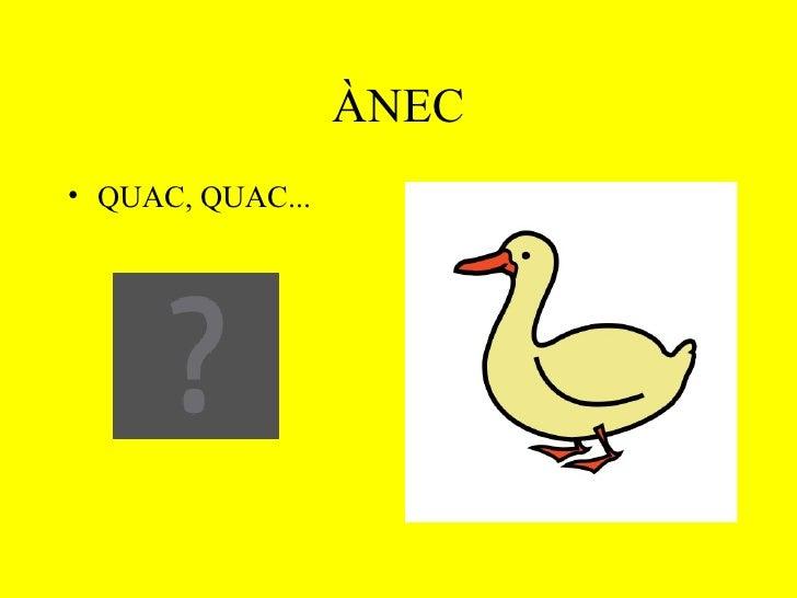 ÀNEC <ul><li>QUAC, QUAC... </li></ul>