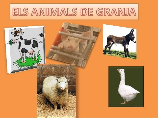  Animals dajuda en les tasques i feines; són bèsties de tir i   càrrega, serveixen per treballar la terra i llaurar els c...