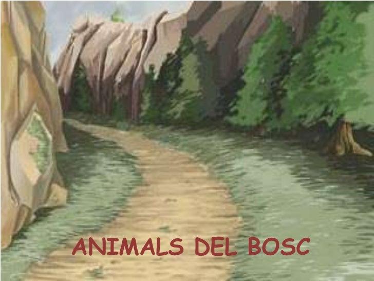 ANIMALS DEL BOSC<br />