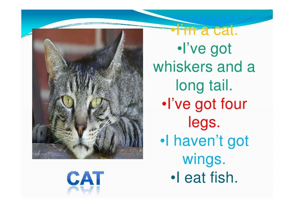 Animals descriptions  pp Slide 2
