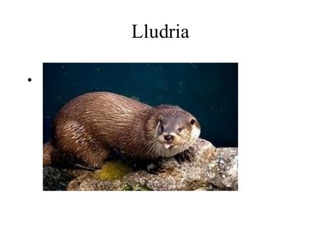 Lludria•