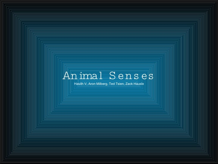 Animal Senses Hasith V, Aron Milberg, Ted Tsien, Zack Hausle
