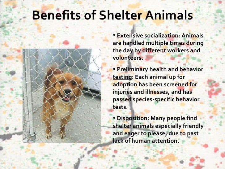 Adopting Dogs From A Shelter