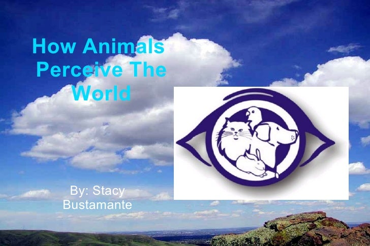 How Animals  Perceive The World By: Stacy Bustamante
