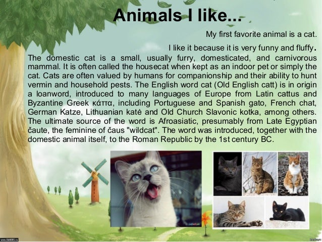 Animals I like... My first favorite animal is a cat.  .  I like it because it is very funny and fluffy The domestic cat is...