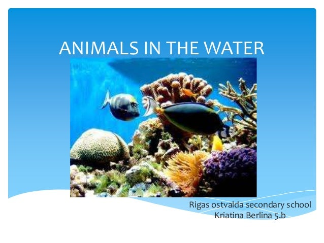 ANIMALS IN THE WATER  Rigas ostvalda secondary school Kriatina Berlina 5.b