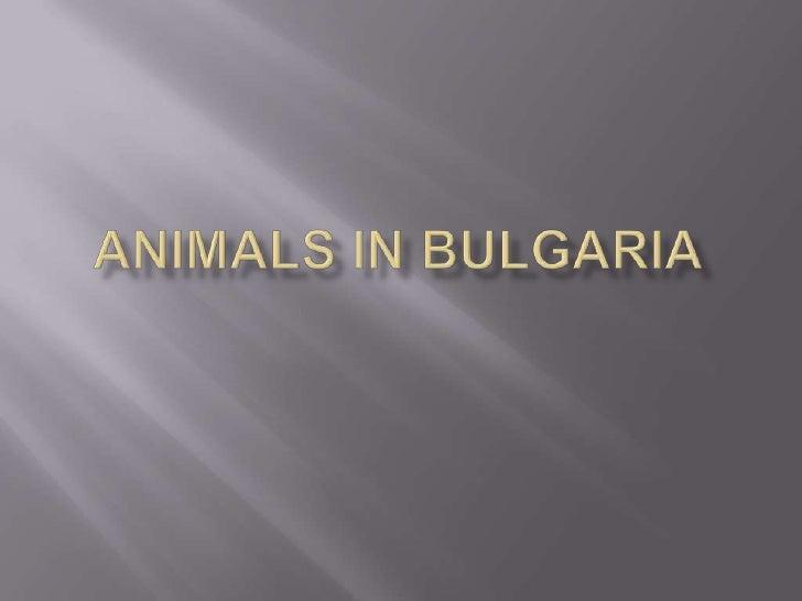 Animals in bulgaria<br />