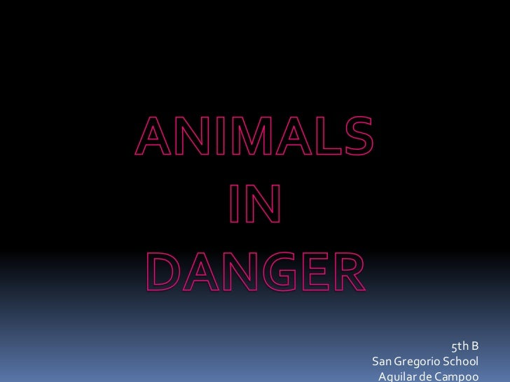 ANIMALS <br />IN <br />DANGER<br />5th B<br />San Gregorio School<br />Aguilar de Campoo <br />