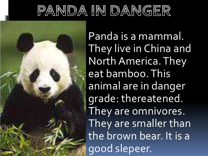 pandas live