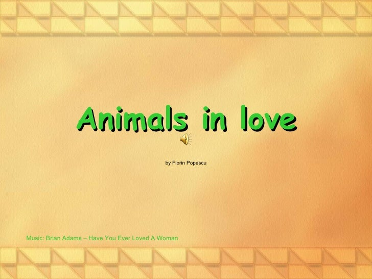 Animals in love by Florin Popescu Music: Brian Adams – Have You Ever Loved A Woman