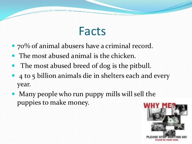 Facts of animal abuse in circus